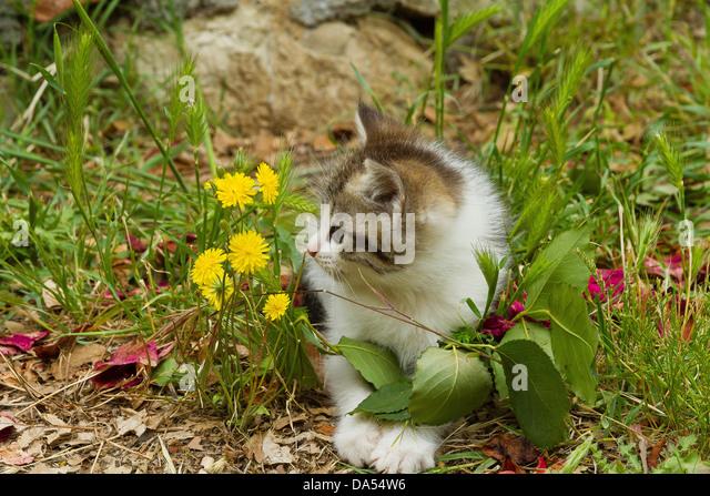 Tier, Katze, Kätzchen, jung, Garten, Haustier, Haustier, Wiese Stockbild
