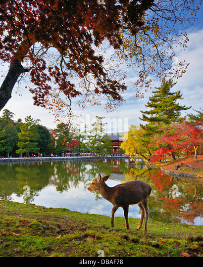 Hirsch auf Todai-Ji-Tempel in Nara, Japan. Stockbild