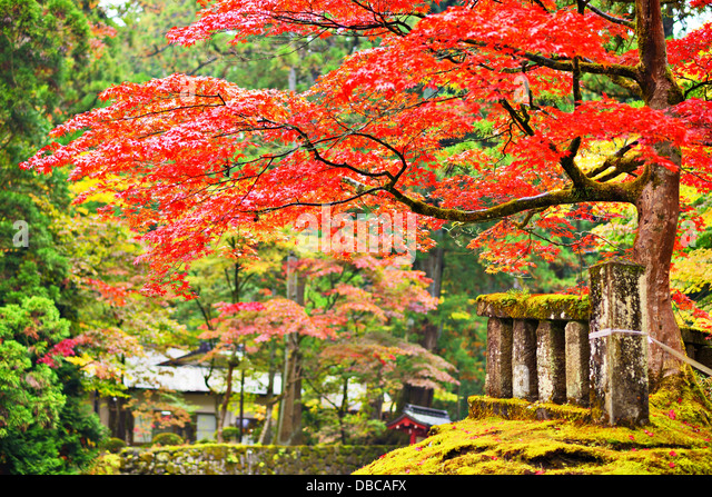 Herbstlaub in Nikko, Japan. Stockbild