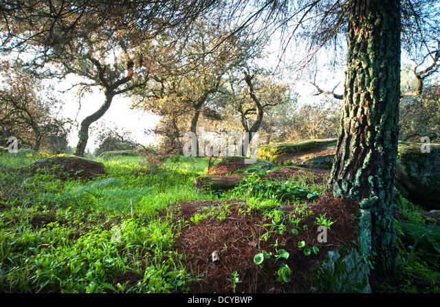 Mediterraner Wald Andalusien Spanien Stockbild