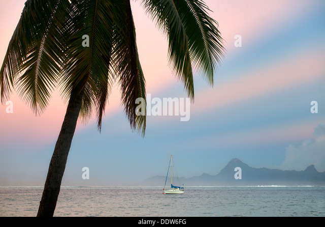 Palm Tree Segelboot, Sunrise und der Insel Moorea. Tahiti. Französisch-Polynesien Stockbild