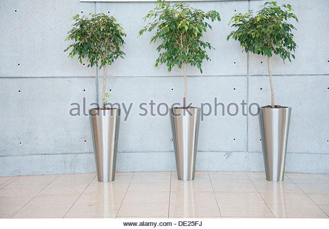 Pflanzen in lobby Stockbild