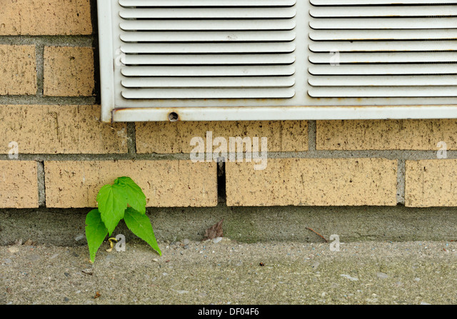 plant growing in crack wall stockfotos plant growing in crack wall bilder alamy. Black Bedroom Furniture Sets. Home Design Ideas