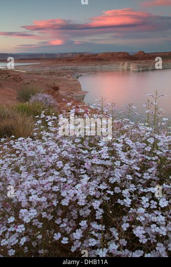 Lake Powell, Glen Canyon National Recreation Area, Arizona. Stockbild