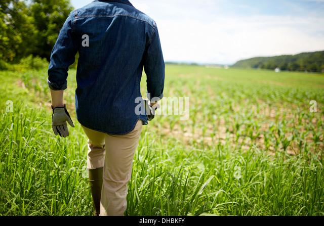 Ein Bauer auf seinen Feldern in New York State, USA. Stockbild