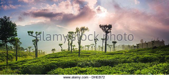 Sonnenaufgang über dem Tee Plantagen und Berge, Hügelland Haputale, Sri Lanka, Central Highlands, Sri Stockbild