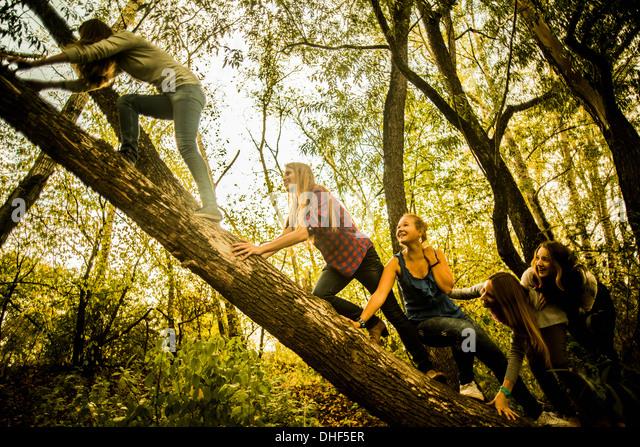 Fünf junge Frauen Kletterbaum in Wäldern Stockbild