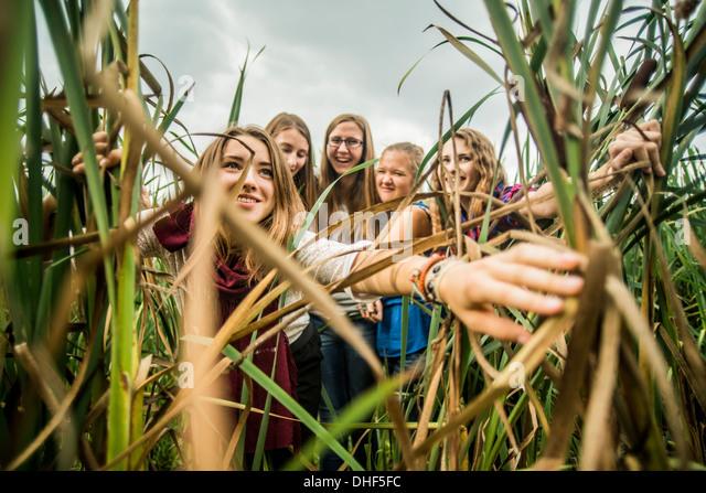 Fünf junge Frauen spähte durch Schilf Stockbild