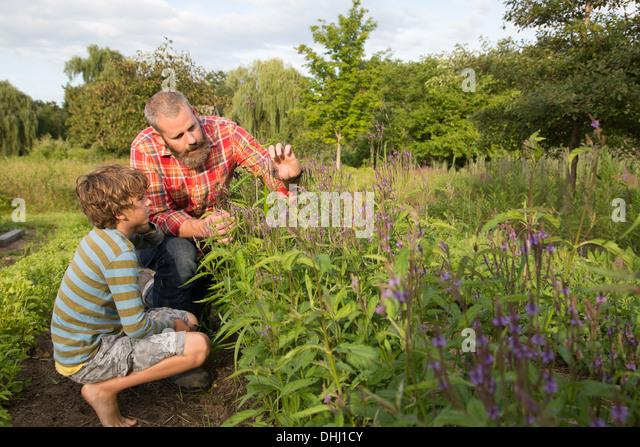 Reifer Mann und Sohn betrachten Pflanzen auf Kräuter-Bauernhof Stockbild