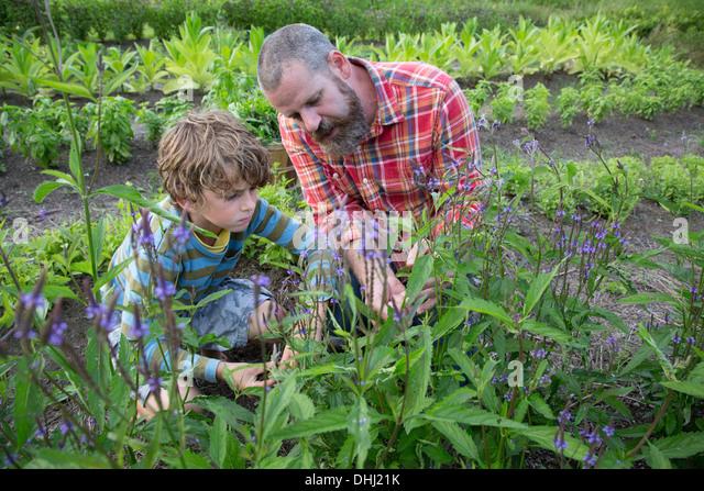 Reifer Mann und Sohn entdecken Pflanzen auf Kräuter-Bauernhof Stockbild