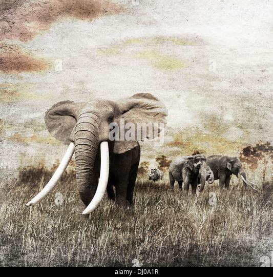 Grunge Bild des Gehens Elefanten Stockbild