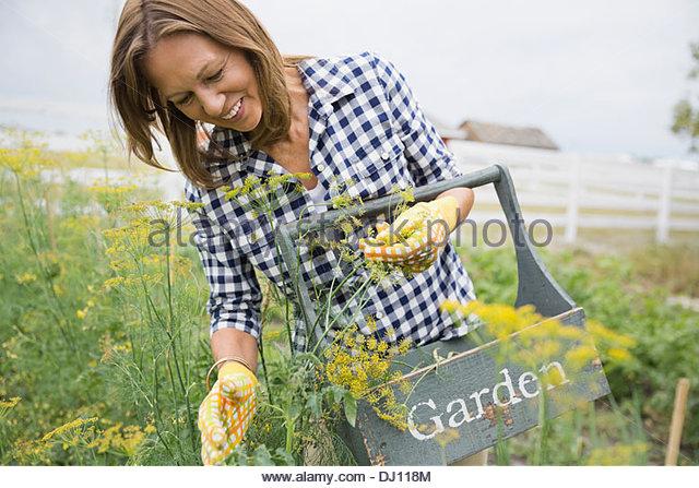 Frau im Garten auf Bauernhof Stockbild