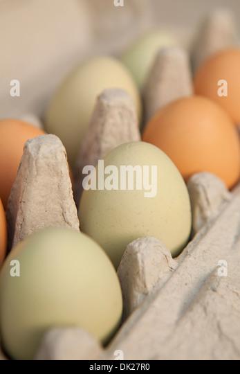 Full-Frame-grüne und braune Bio Eier im Karton hautnah Stockbild