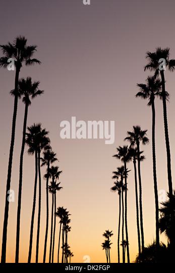 Niedrigen Winkel Blick auf Silhouette Palmen vor Sonnenuntergang Himmel, Corona del Mar, Kalifornien, Vereinigte Stockbild