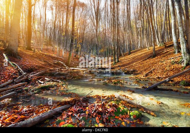 Wilder Gebirgsfluss in den herbstlichen Wald Stockbild