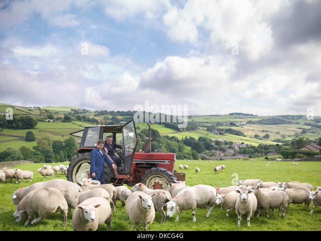 Landwirt in Traktor mit Sohn gerade Schafe im Feld Stockbild