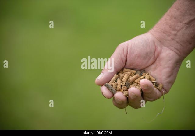 Nahaufnahme von Bauer, Tierfutter, Fokus auf Vordergrund halten Stockbild