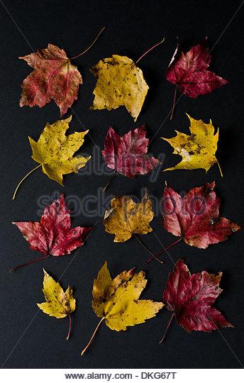 Rote und gelbe Herbstlaub in Gitter-Muster auf schwarzem Hintergrund. Stockbild