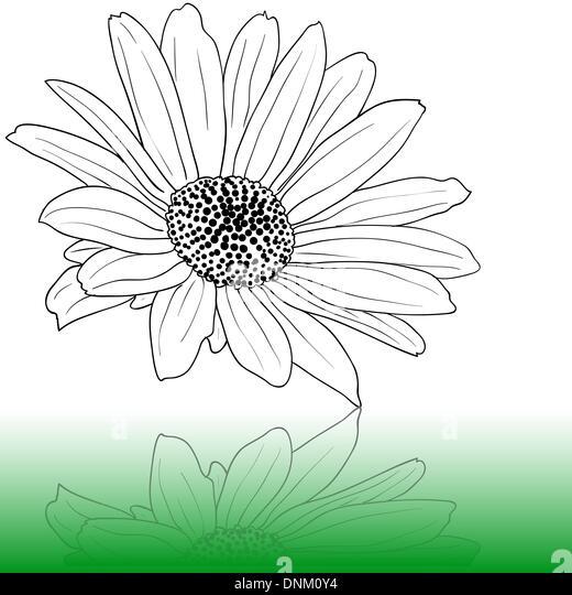 Vektor hand gezeichnete illustration Stockbild