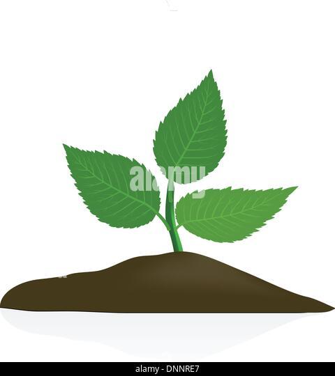 Junge Pflanze im dunklen Boden isoliert auf weißem Hintergrund Stockbild