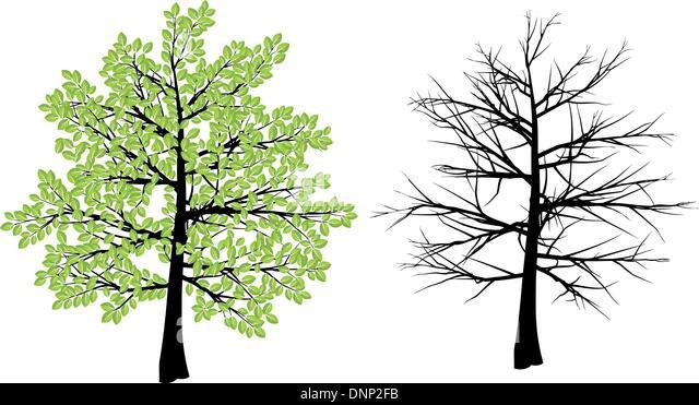 Baum-Darstellung Darstellung Frühling und winter Stockbild