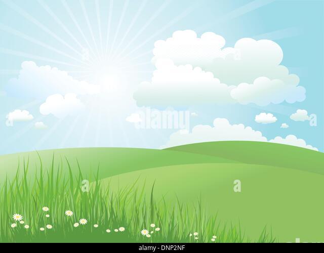 Sommerlandschaft mit Gänseblümchen im Rasen Stockbild