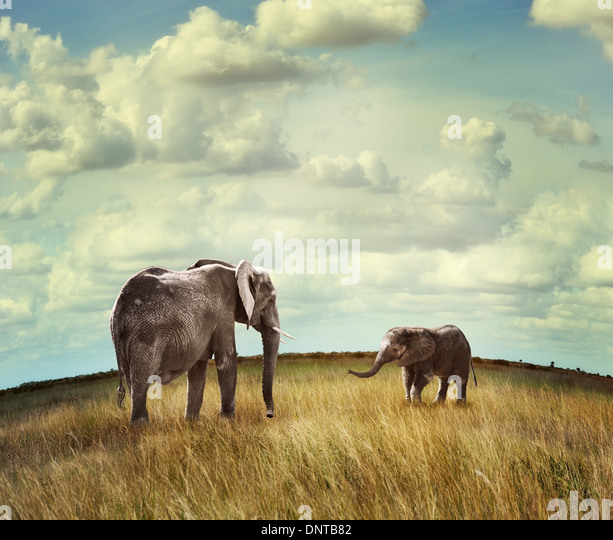 Junge afrikanische Elefanten mit Mutter Stockbild