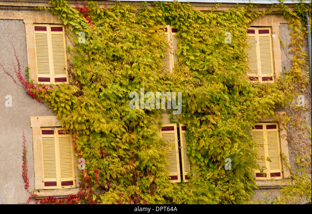 wisteria covered house stockfotos wisteria covered house bilder alamy. Black Bedroom Furniture Sets. Home Design Ideas