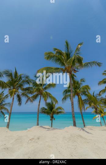 Karibik-Strand Mit Palmen, Karibik-Strand mit Palmen Stockbild