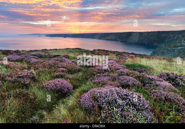 Heather wächst auf der Klippe am nördlichen Klippen mit der Sonne ab, über den fernen Küsten Stockbild