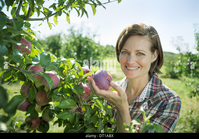 Woodstock New York USA Frau im karierten Hemd Äpfel Obstgarten Bio-Bauernhof Stockbild