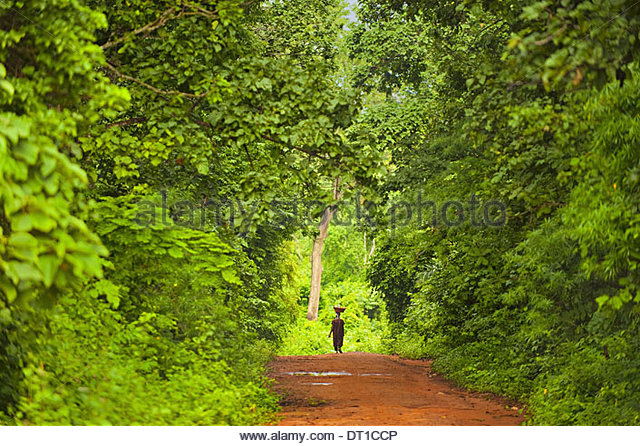 Boabeng-Fiema Monkey Sanctuary Ghana Frau zu Fuß durch Wald Boabeng-Fiema Stockbild