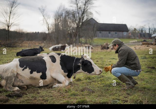 Dairy Farm Stockbild