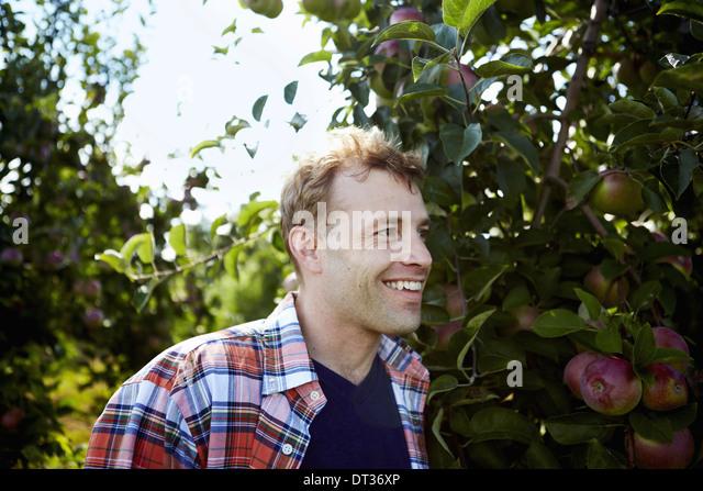 Ein Mann in ein kariertes Hemd in einer Apfelplantage Baum Stockbild