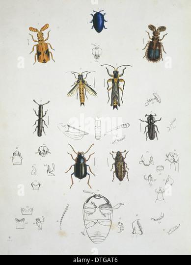 Illustration der Käfer Stockbild