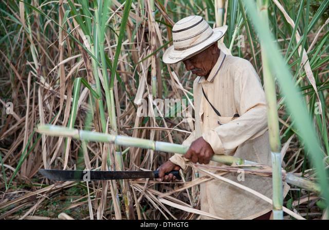 Panamaischer Mann schneiden Zuckerrohr in der Nähe von Penonome in Provinz Cocle, Republik von Panama. - Stock-Bilder