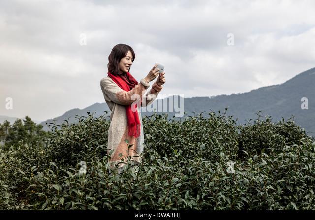 Junge Frau nehmen Foto auf Teeplantage, Taipei, Taiwan Stockbild