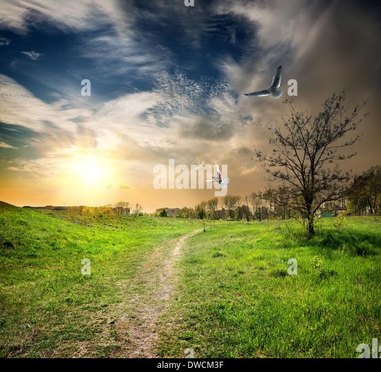 Landstraße und Vögel in der Dämmerung des Tages Stockbild