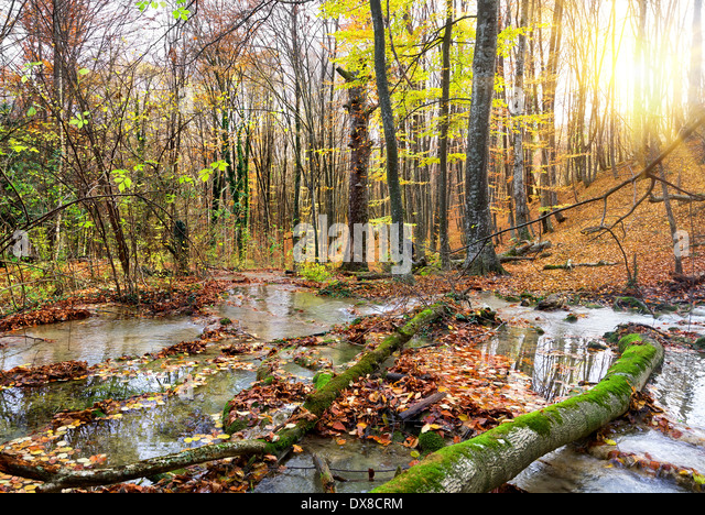 Kaskade-Berg-Fluss in einem Wald im Herbst Stockbild