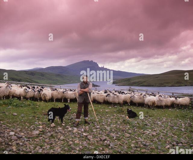 Donald MacDonald, Schafzüchter auf den äußeren Hebriden Trotternish, Isle Of Skye. Stockbild