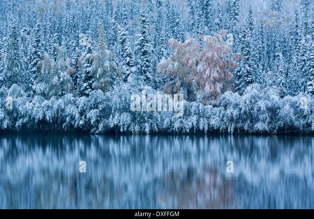 Frühen Schnee und Herbst Farben an fünf Meile See, auf der Silver Trail Nr. Mayo, Yukon Territorien, Kanada Stockbild
