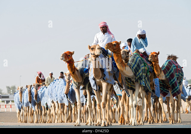 Kamelrennen Festival auf Al Marmoum Kamelrennen Rennstrecke in Dubai Vereinigte Arabische Emirate Stockbild