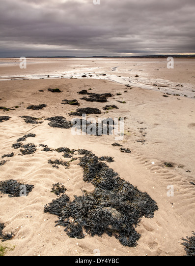 Holy Island Sand auf heiligen Insel Lindisfarne, England Stockbild