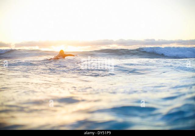 Surferin, Schwimmen Wellen auf Surfbrett, Sydney, Australien Stockbild