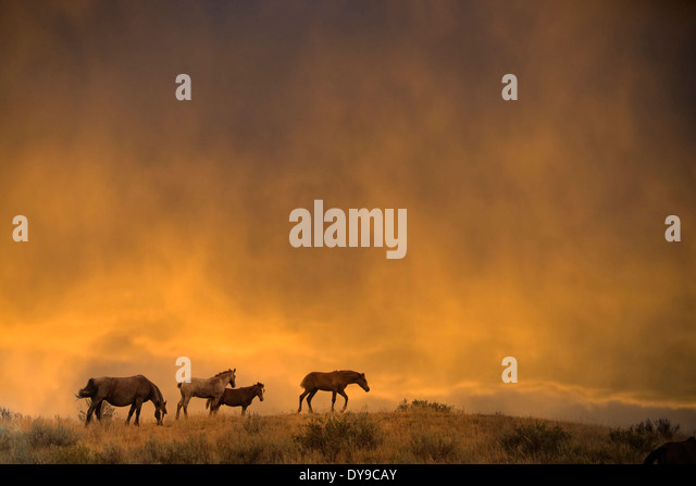 Wildpferd, Theodore Roosevelt Nationalpark, North Dakota, USA, USA, Amerika, Pferde, Tier, Sonnenuntergang Stockbild