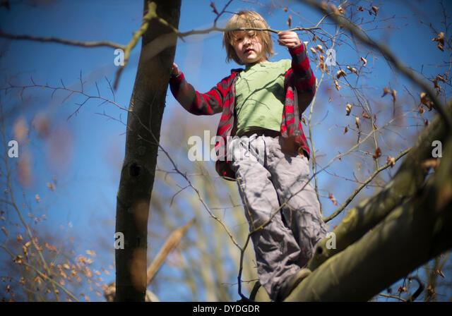 Sieben Jahre alter Junge einen Kletterbaum. Stockbild