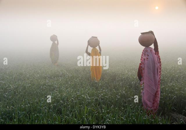 Frauen mit Krügen Wasser auf Kopf, ein Spaziergang durch Reisfelder bei Sonnenaufgang an einem nebligen Morgen, Stockbild