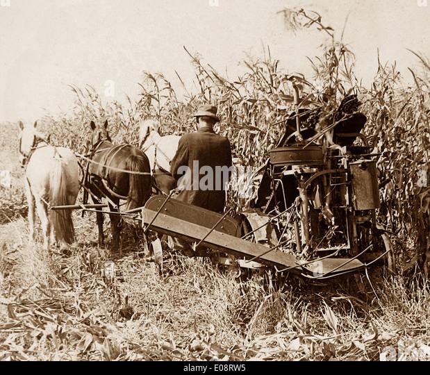 Mais-Ernte in Indiana frühen 1900er Jahren Stockbild