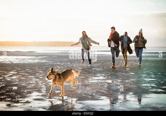 Erwachsene Freunde Rennen mit Hund am Strand Stockbild
