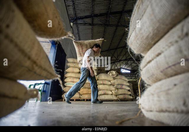 Jardin, Departement Antioquia, Kolumbien. 21. März 2014. 21. März 2014 - Kaffeebohnen aus der heimischen Stockbild